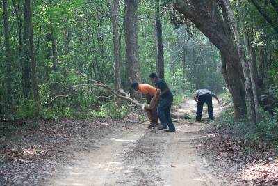 Clearing jungle road blocks (Tracker Saman in Orange T-shirt, Our Friend in Dark Blue Shirt and the Driver in stripped shirt)