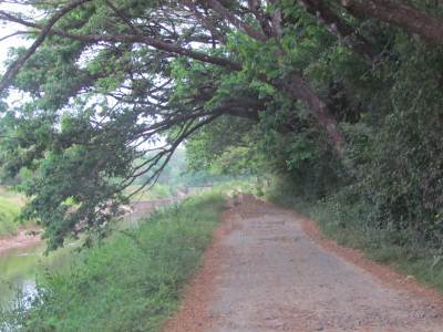 Byroad along the irrigation canal