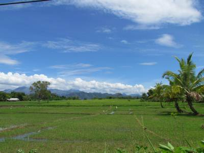 Paddy fields around Buttala with Mountains in the backdrop