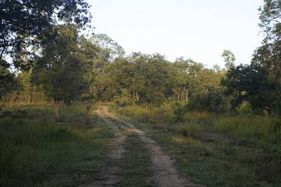 The by road linking the camp site to the one and only jeep track of the park