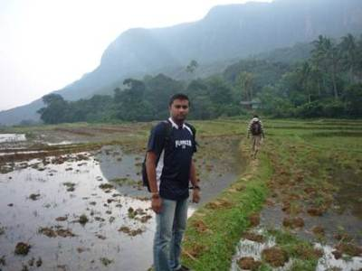 Paddy Fields Of Attanwala