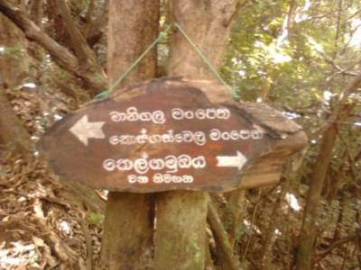 Reaching Forrest department Bunglow………