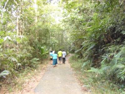 Walking on the paved road (easy for a jungle trial. Ideal forest to bring parents and children isn't it )