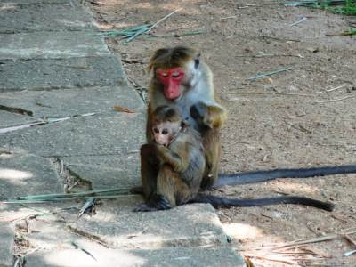 Monkey mother's love 1