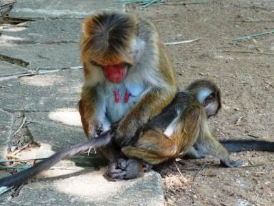 Monkey mother's love 5