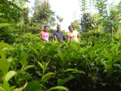 They had a walk in the tea field….