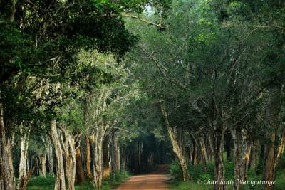 Through the tree lined roads……..