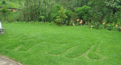 Grass 'carving'