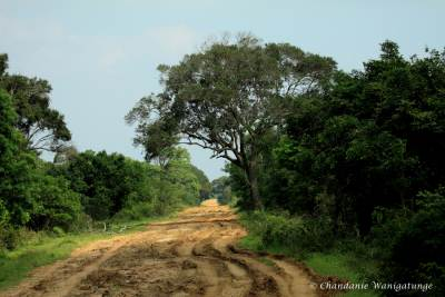 Road to Mannar……