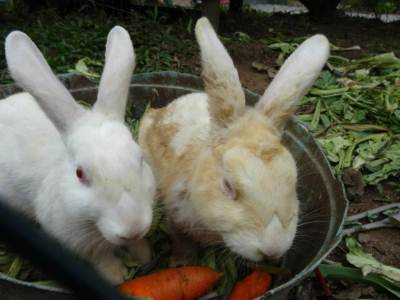 Feeding on carrots