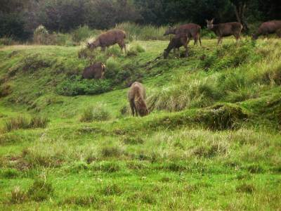 Common sight at Horton plains