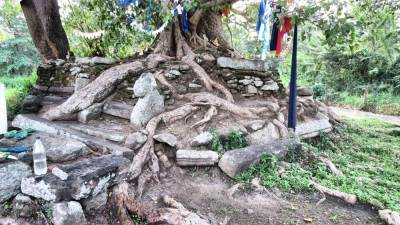 Branch of sacred Bo-tree. Note ruins around that. This is found as an Octagonal Bodhigaraya