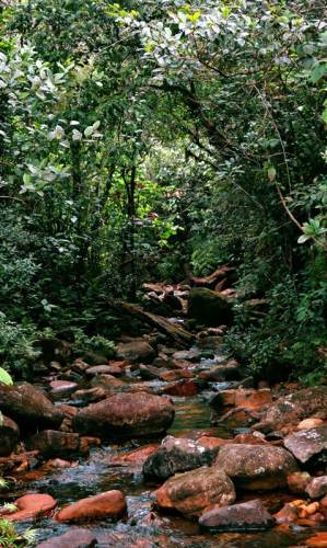 main tributary of battulu oya(base of adams peak stream)