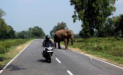 Hello Big guy….running into a wild elephant