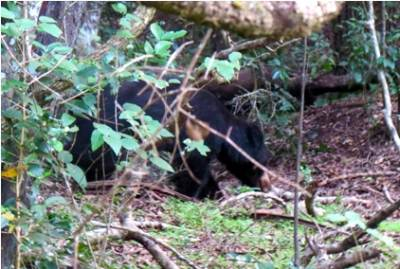 The bear. Only Ashan had a clear capture