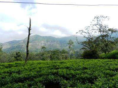 Magnificent view of mountains from tea estates