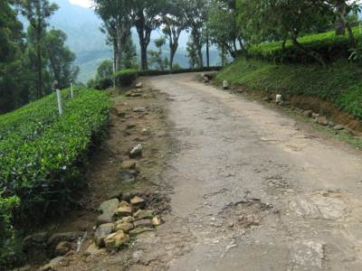 Road from junction to Tea factory