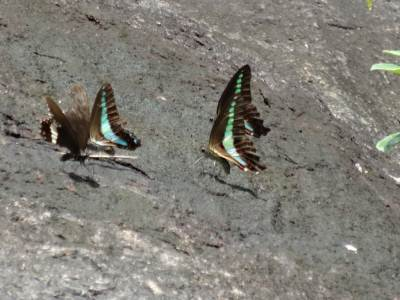 Butterfly conference... they are trying to decide who goes where