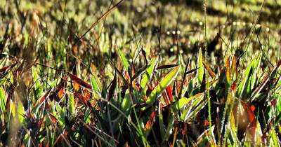 grass at the plains getting sun burnt