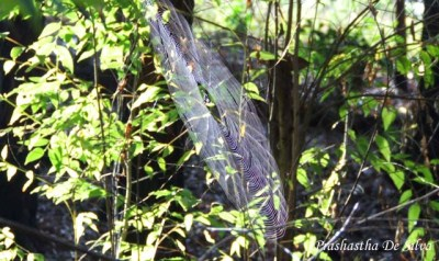We came across a lot of spider webs of different sizes