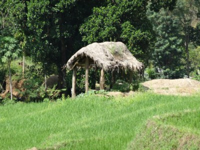 Resting place at the paddy field