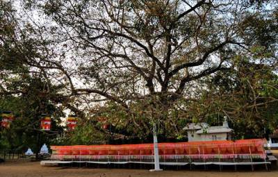 decorated bo tree at bollagama RMV