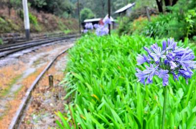 Well maintained Ohiya station