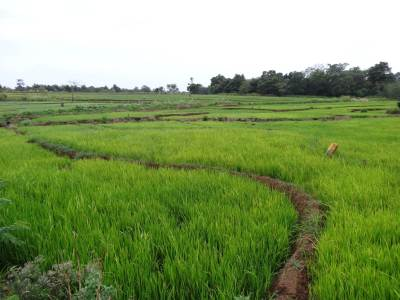 One of my favorite picture taking places... paddy fields