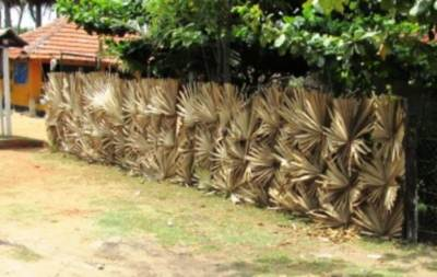 'Thal kola Weta' Palmyra leave fence is Very common in Mannar