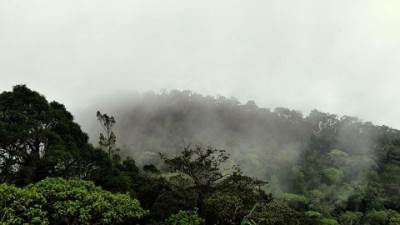 it was like horton plains