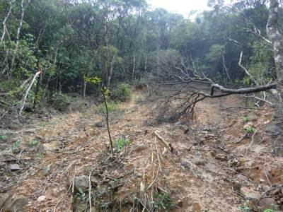 Land slides in side the forest