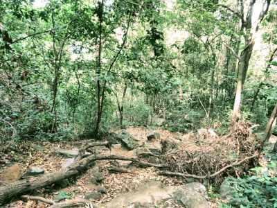 Foot pathway in the dry zone forest.