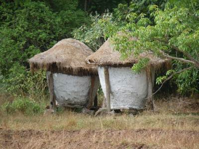 Traditional wee-bissa in Dunuwila village wasgamuwa.