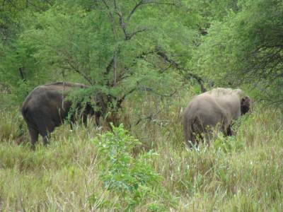 Wild Elephants in wasgamuwa.