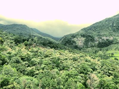 Thick mountain forest