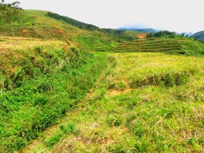 The way through abounded lands following cultivation of tea.
