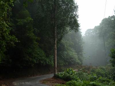 misty road towards palabaddala