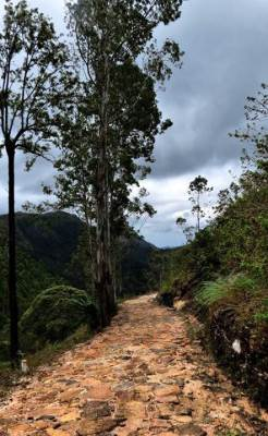 path to Dehigala estate which belongs to monaragala division