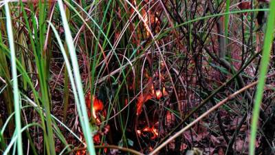 he had made a fire , almost got caught to a bush fire