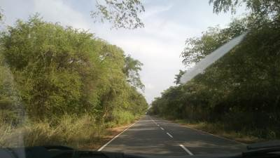 """Deyata Kirula Road"" through the greenery"