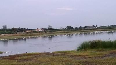 Lake full of birds in front of the Kovil