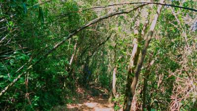 "Knuckles forest is full of Bamboo trees. That's why it is called ""Bata Dandu Wanaya"" (බටදඩු වනය)"