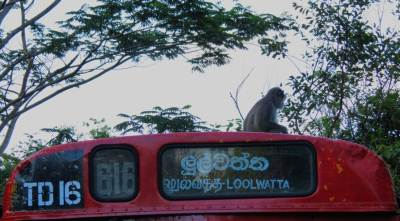 Another companion of the tour. We have noticed this monkey travels on the Bus.