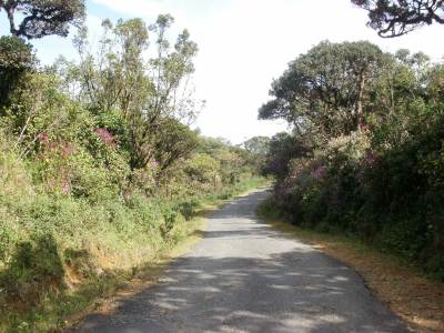 Along Ohiya Road towards Horton Plains….