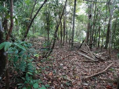 The jungle patch on the top and it looks as if people roam around here looking for firewood