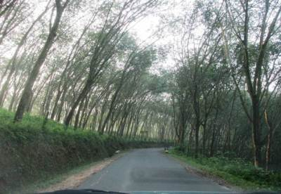 Road through rubber estates
