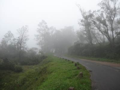 Misty road towards the farm