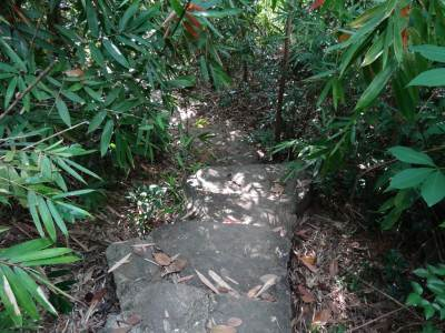 Bamboo shady path