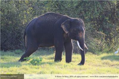 The tusker we met