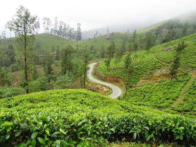 We continued our journey witnessing the long stretch of tea plantations in the misty mountains. Although the road was narrow our driver showed his skillful driving knowledge by driving cautiously